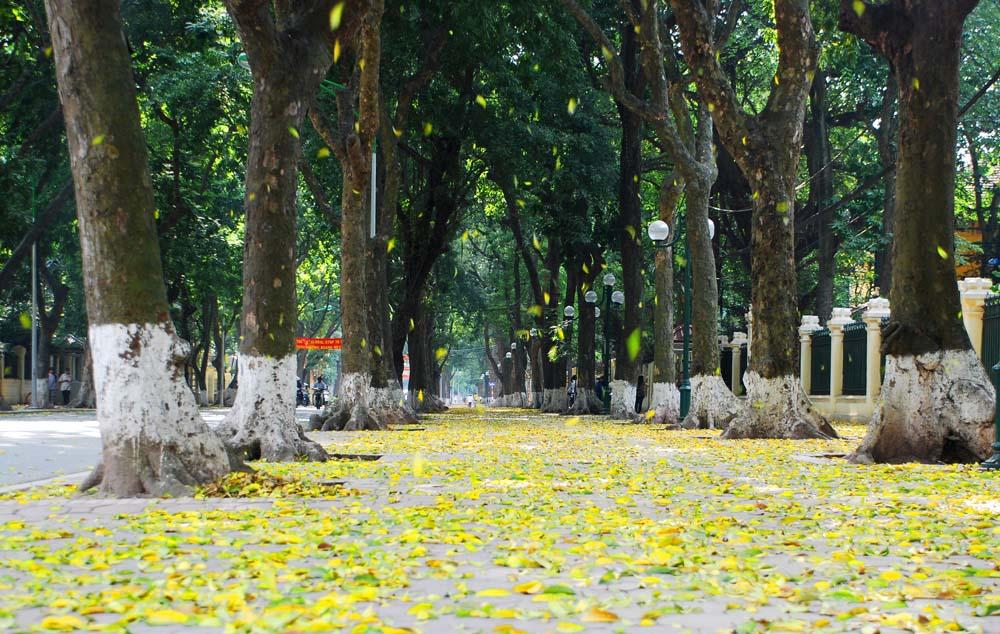 Ảnh đẹp một góc phố thu Hà Nội